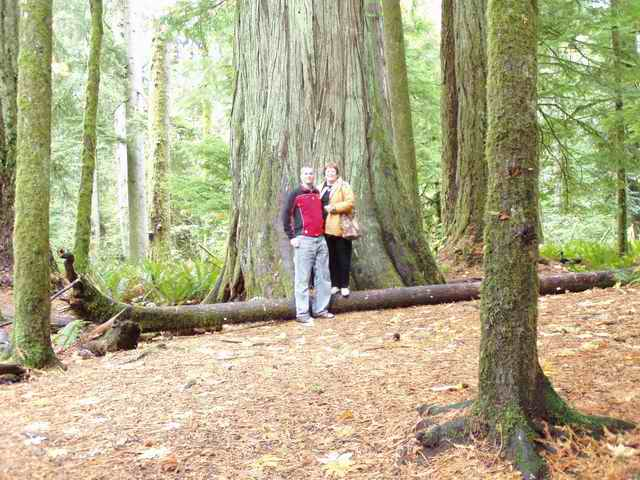 A picture from the Cathedral Grove on Vancouver Island
