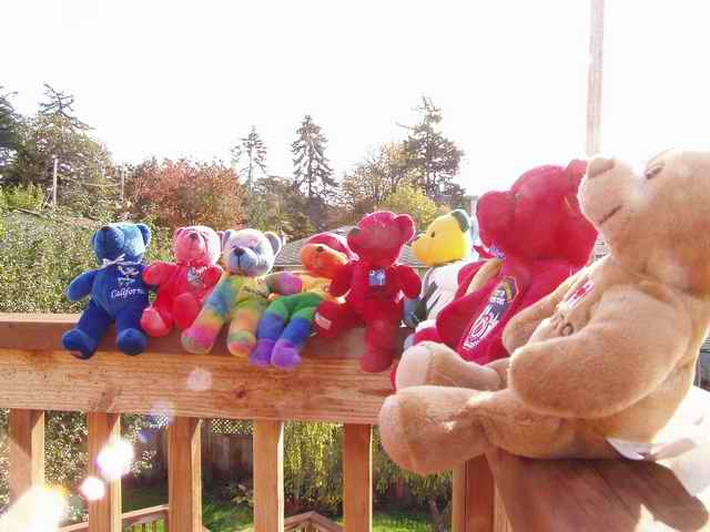 Picture of Sam's Bears